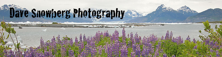 Dave Snowberg Photography ~ Adventure Travel and Wildlife Photography ~ Home